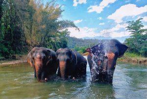Freiwilligenarbeit Thailand Elefantencamp