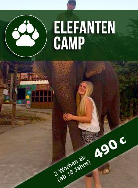 Elaphant Camp Thailand