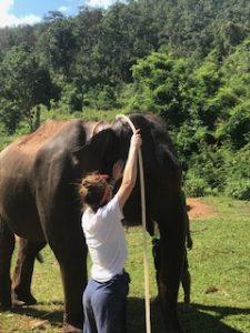 volunteer elephant sancturay