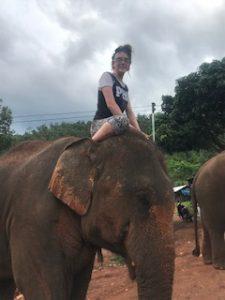 enjoy elephants