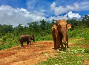 volunteering elephant project thailand