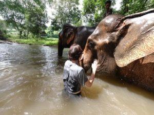 volunteer elephants