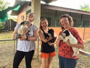 dog and cat shelter costa rica volunteering