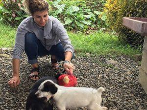 volunteering dog shelter south america