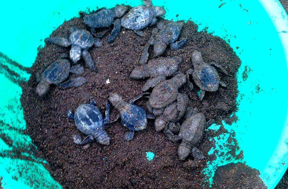 Erfahrungsbericht Freiwilligenarbeit Costa Rica Meeresschildkröten Mario